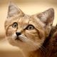 Аватар пользователя TiGeREyE