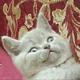 Аватар пользователя pashkevich1997