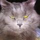 Аватар пользователя bragin75