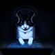 Аватар пользователя RedMai