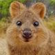 Аватар пользователя Comedydark
