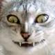 Аватар пользователя kokorochan