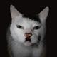 Аватар пользователя cocasola01