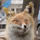 Аватар пользователя DontDisturb