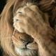 Аватар пользователя lionfanty