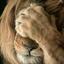 lionfanty