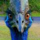 Аватар пользователя fatonm