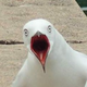 Аватар пользователя HerrKompot