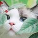 Аватар пользователя ioshkKun