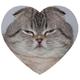 Аватар пользователя Klepcheg