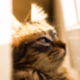 Аватар пользователя Crocoproka