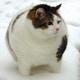 Аватар пользователя lisoid