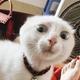 Аватар пользователя Elizar245