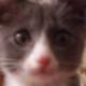 Аватар пользователя KartowkaFree