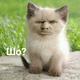 Аватар пользователя studentlui