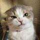 Аватар пользователя catinbox