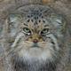Аватар пользователя MrMurkins
