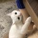 Аватар пользователя lopi159357