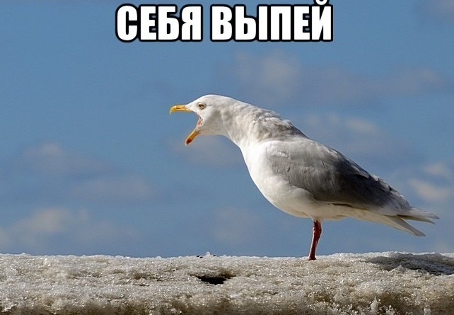 https://cs8.pikabu.ru/images/big_size_comm/2016-02_3/1455221449171830880.jpg