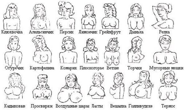 Разновидности женских сисек фото