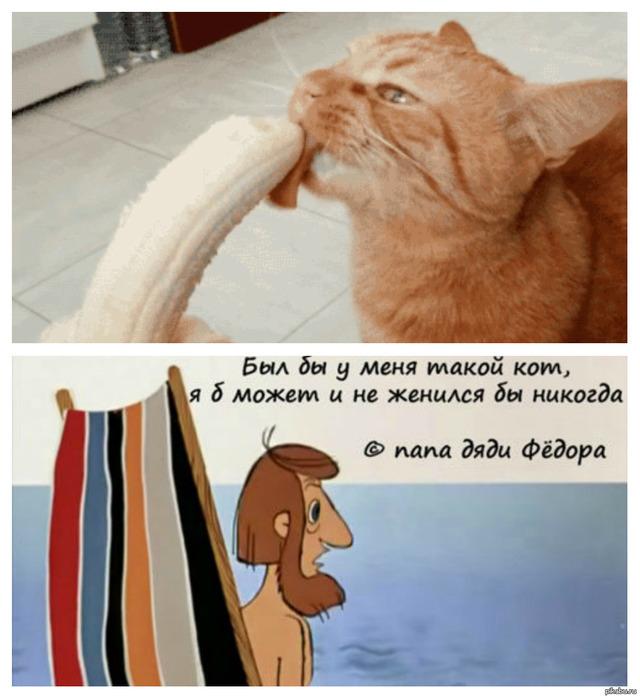 Котенок сосет свою лапу