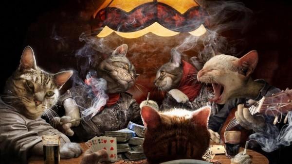 карты картинки коты играют в