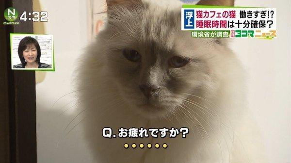 猫カフェの爆笑画像