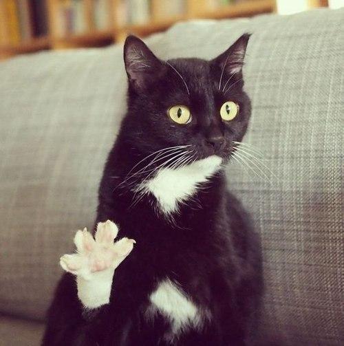 Картинки привет коты