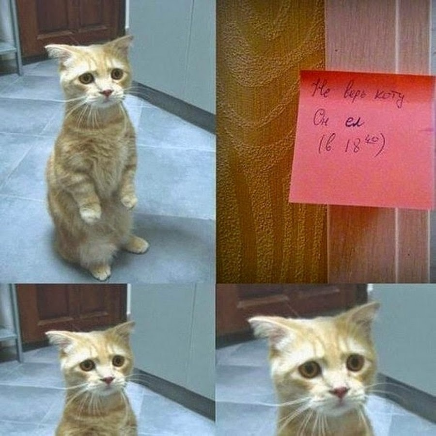 Если жена не хочет кота