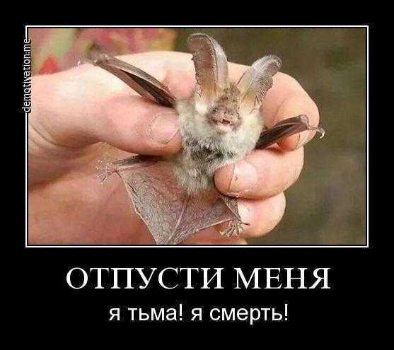 https://cs8.pikabu.ru/images/big_size_comm/2016-12_3/1481803056182236387.jpg