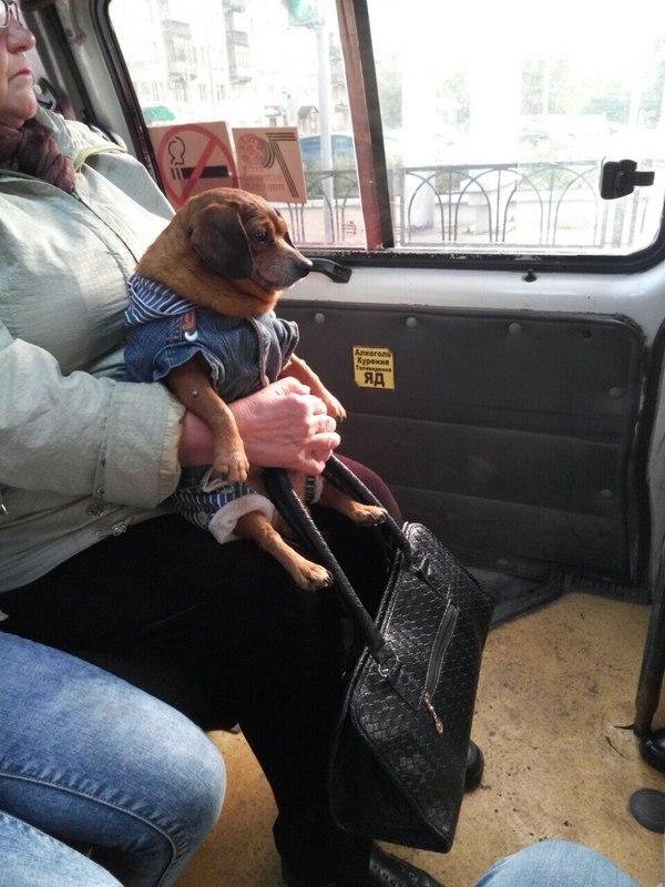 Картинки по запросу собака в куртке в автобусе