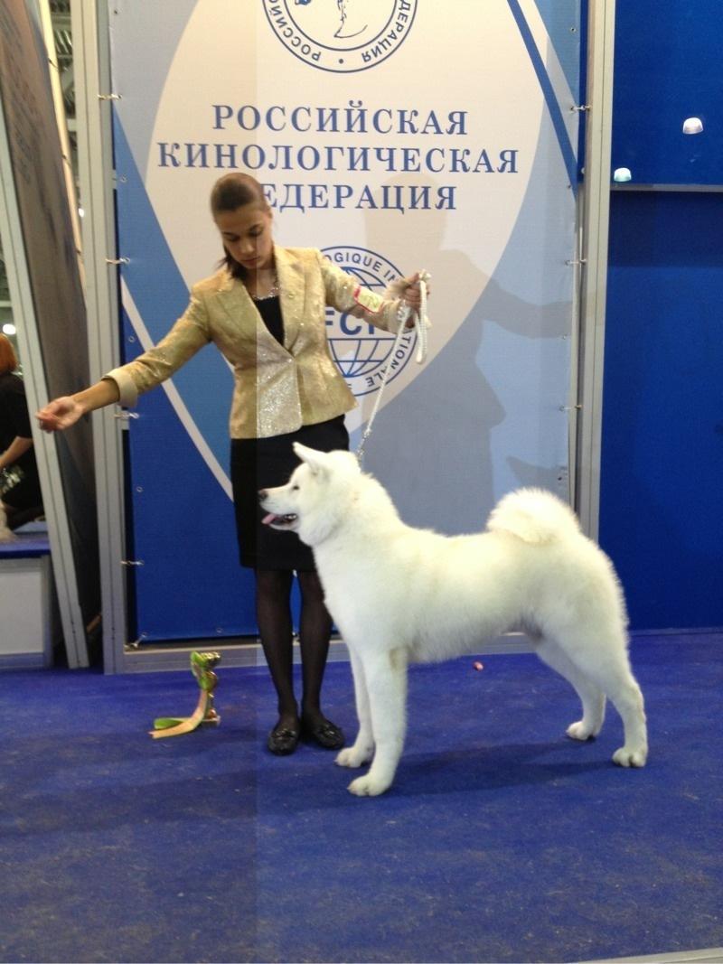 Женщина раскрывает как трахал ее пёс фото 601-540