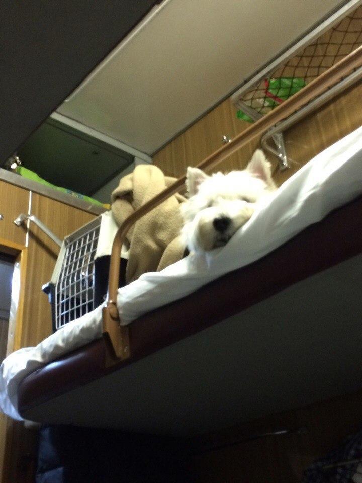 Как взять с собой в поезд кота