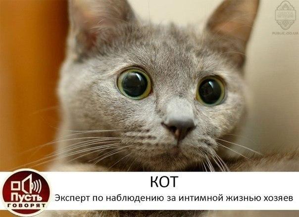 Порно п котя