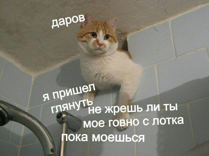 Кастрированне коты могут заниматься сексом
