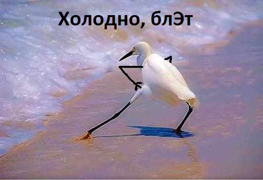 https://cs8.pikabu.ru/images/big_size_comm/2017-07_4/150044773613544625.png