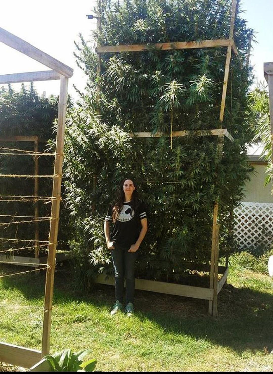 Сколько грамм с одного куста марихуаны где добыть марихуану