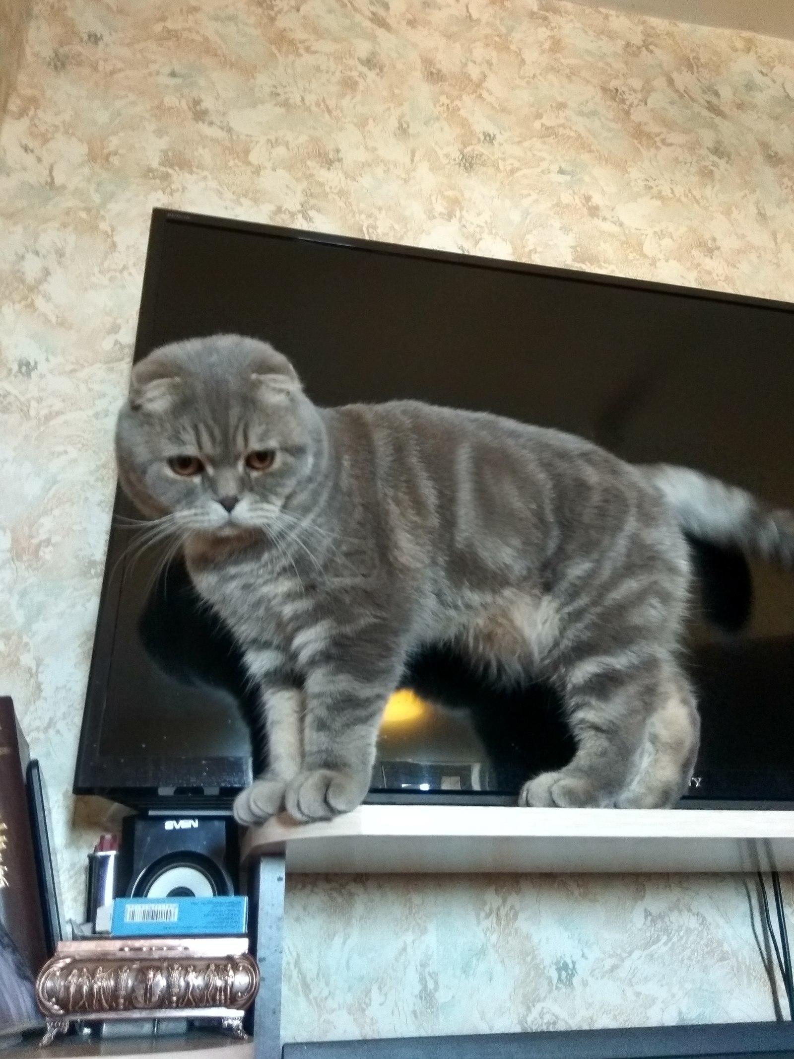 Найдёшь кота в комнате, или на балконе