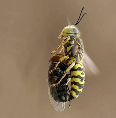 Секс с насекомыми в говне