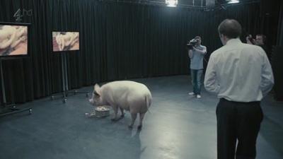 Парень трахает свинью