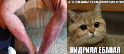 Пробей кота