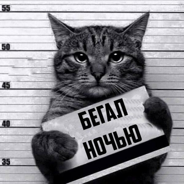 Рецидивист Кот, Рецидивист, Jpeg, Длиннопост