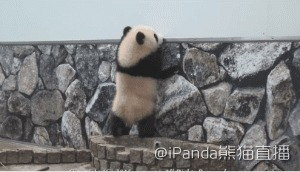 Панды...