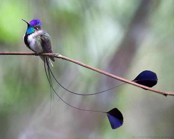 скачать колибри торрент - фото 4