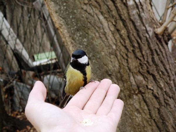 А ты сделал(а) кормушку для птиц? Поднимите в горячее, а для минусов комменты внутри ^_^ Птицы, Кормушка, Кормушка для птиц, Зима, Доброта, Природа, Фотография, Животные, Видео, Длиннопост