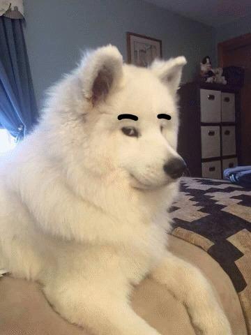 Если ты понимаешь, о чем я Собака, мемы, Если  вы понимаете о чем я, гифка