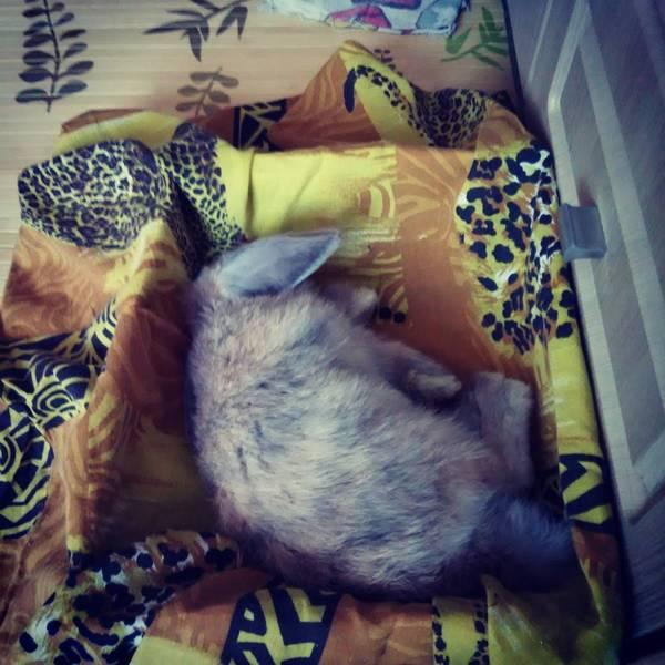 Спящий кролик :3