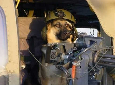 War Dog Собака, Пёс, Вертолет, Миниган