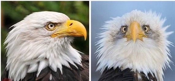 Теперь вы знаете, почему на гербах орлов чаще всего изображают в профиль