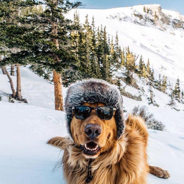 Хипста-пес Фото, Instagram, Собака, Длиннопост